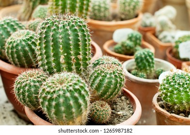 Photo of small suculents or cactus