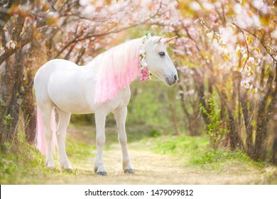 photo of a snow-white unicorn with a pink and white mane and tail in a spring flowering garden, a magical garden.