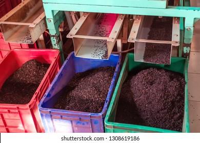Photo of Sort tea. Tea factory