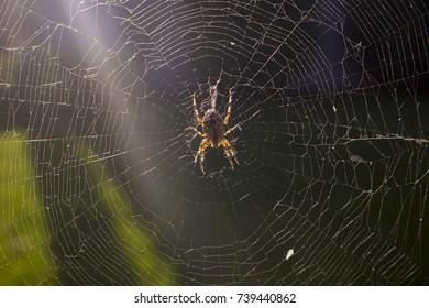 the photo of the spider in the cobweb closeup