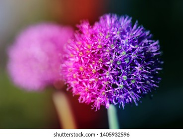 Photo spring macro-lilac round flower on green background