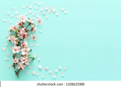 photo of spring white cherry blossom tree on pastel mint wooden background. View from above, flat lay