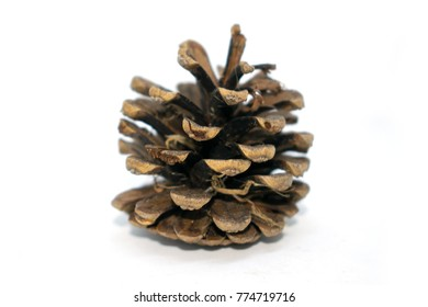 Photo of spruce cones. For decoration, decoration for the new year. On a white background.