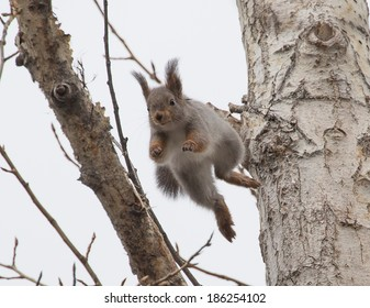 photo of squirrel jumping between branches of tree