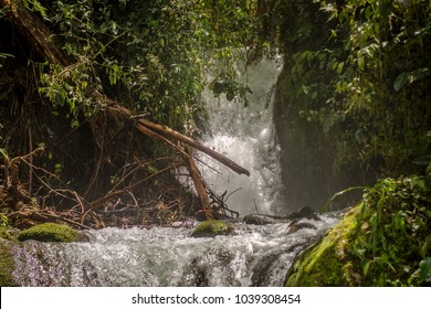 Photo of a stream flowing in the dens green rain forest of Ecuador with small waterfalls on it. The water drops and humidity in the water makes the scenery a bit hazy and wild.