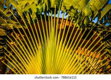 Photo surface of palm leaf background palm leaf