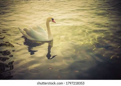 photo of a swan on the lake