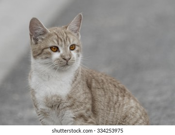 Photo of a sweet and adorable cat