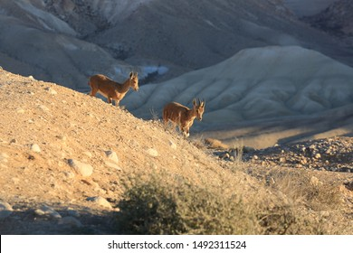 The photo was taken in the Ein Avdat National Park, not far from the Sde Boker settlement in southern Israel, in winter, at sunset.