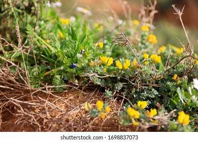 Photo taken on the Mediterranean coast of Israel in the Sharon Nature Reserve in spring 2020