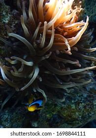 photo taken while diving in the red sea in israel in eilat
