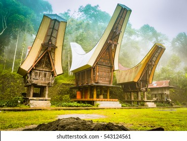 Photo of three ancestral houses with saddleback roofs in morning fog in Toraja region, Sulawesi in Indonesia.