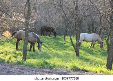 photo of three horses - black, white and brown