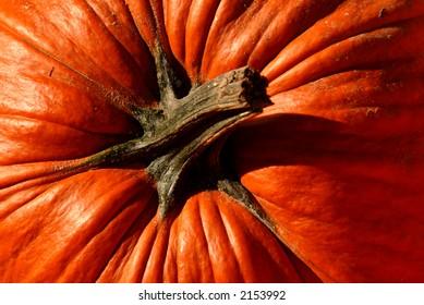 Photo of top of pumpkin
