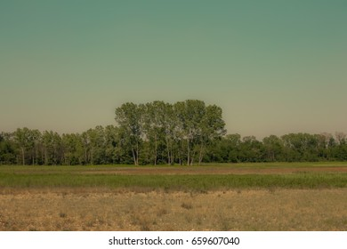 Photo of a tree or group of trees in the distance