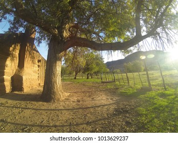 Photo of a tree next to a ghost house.