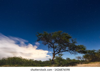 Photo of a tree on the beach at night with the stars in the sky