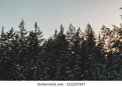 Photo of Trees near Grouse Mountain in North Vancouver, BC, Canada