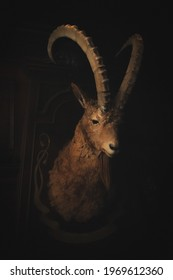 photo: trophy goat head. Stuffed goat.
