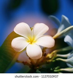 Photo of a tropical tropical beautiful flower on a dark background