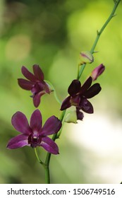 Photo of a tropical tropical beautiful orchid in the park.