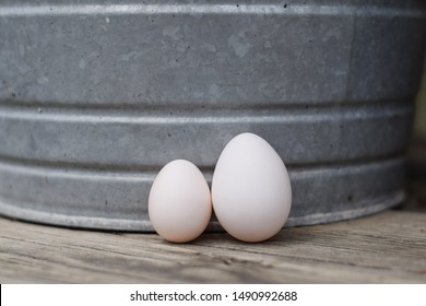 Photo of two eggs, one from a full sized chicken and one from a bantam breed, which is smaller. This shows the comparison between the two eggs in terms of size.