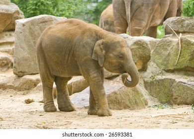 Photo of the two elephants in the zoological garden