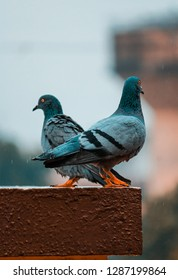 photo of two gray pigeons during daytime