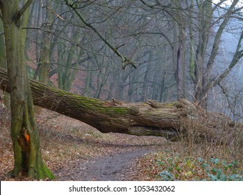 Photo of an uprooted tree blocking a forest path