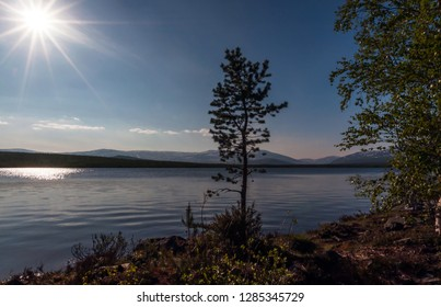 Photo of a very beautiful, lonely standing pine on the lake with a view of the mountains above the Arctic Circle during the polar day. Murmansk region, Kola Peninsula
