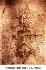 Photo of the Vitruvian Man by Leonardo Da Vinci .