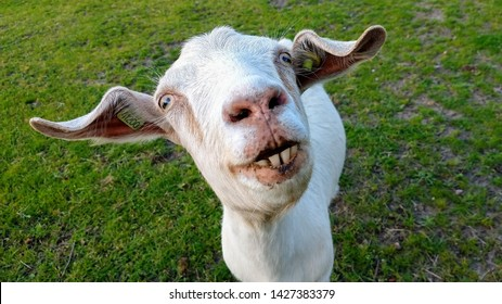 Weird Images Stock Photos Vectors Shutterstock Assembled below are historical photos of the astonishing things people have done throughout time, some of which aren't more than 30 years old. https www shutterstock com image photo photo weird looking goat 1427383379