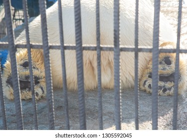 A photo of a white bear in a cage from the back. Paws of a reclining bear through the twigs in the sunlight close up.