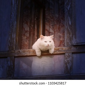 Photo of a white cat in the window of a village house