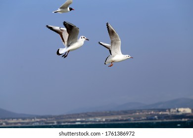 Photo of a white gull in a blue sky on a sunny day