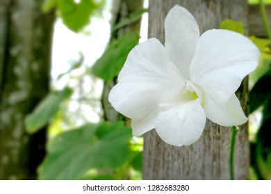Photo of White orchid with nutural tree and leves behind