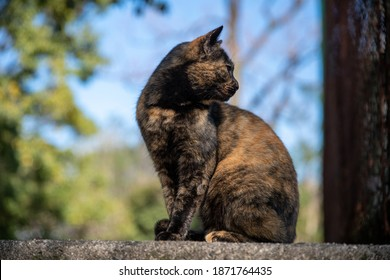 Photo of wild brown adult cat