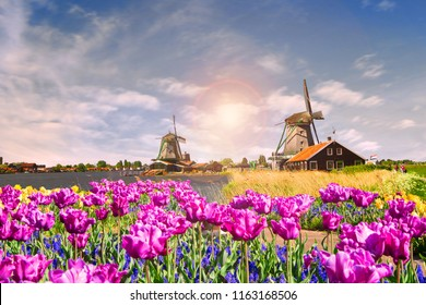 Photo of windmill in Holland with blue sky at sunrise