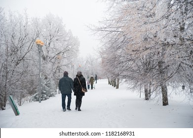 Photo of the winter nature of the park. Texture of snow-covered branches against a white winter park. People stroll in the park in winter