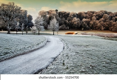 photo winter scenic nature capture of forest walk in ireland