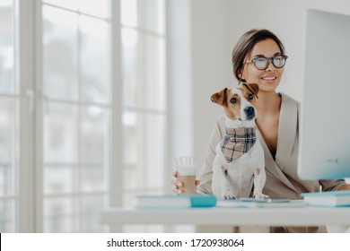 Photo of woman works freelance from home, concentrated in monitor of computer, wears spectacles, poses at desktop with jack russel terrier dog, drinks beverage, smiles positively enjoys favorite work