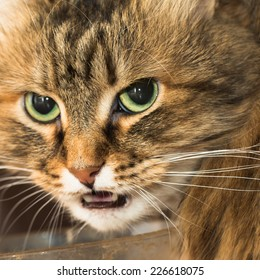 The photo you can see a portrait of domestic cat.