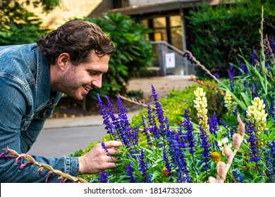 Photo of a young and attractive man with beard wearing a jean jacket and smelling some lavender flowers during spring time.