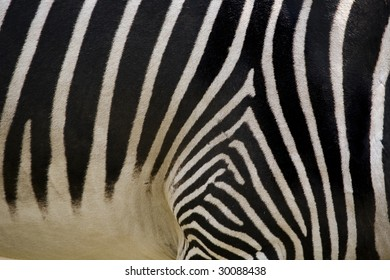 Photo of  Zebra Skin Texture
