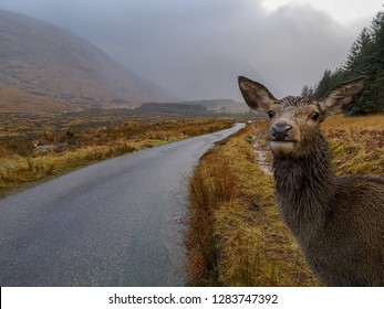 photobombed by a deer in glen etive