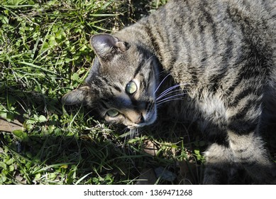 The Photogenic Cat