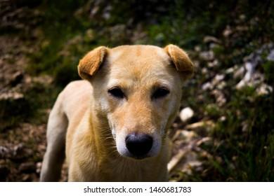 A Photogenic Mountain Dog while Hiking