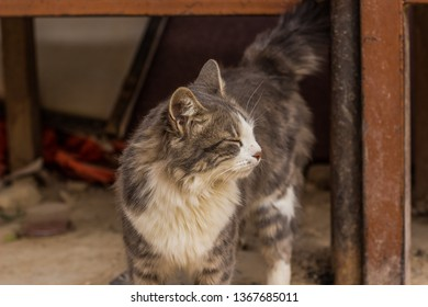 photogenic street cat profile portrait with closed eyes on a wind and head turn side ways