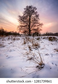 A photograf of a lonely tree with the setting sun in the background