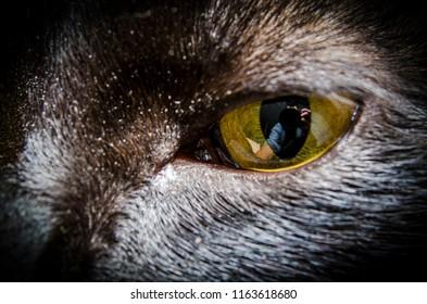 a photografer reflex in a cat eye